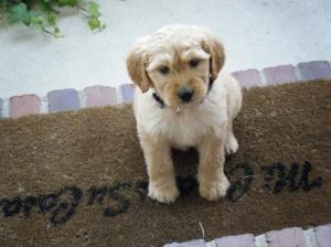 Addi puppy