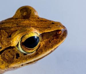 tree-frog-299883_640